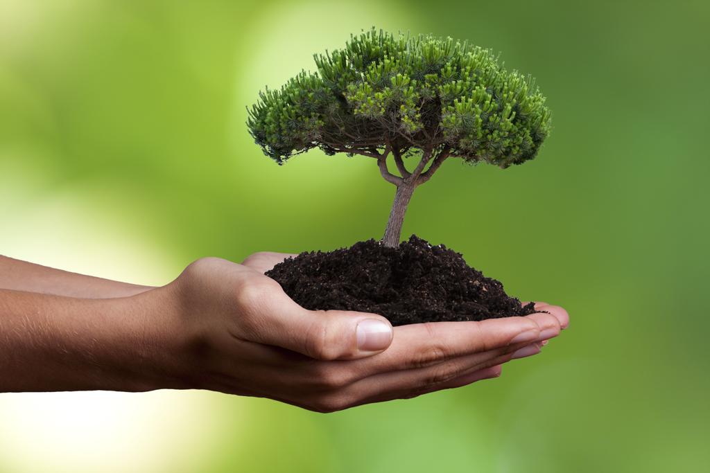 Nachhaltigkeit gegenüber der Umwelt